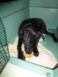 Cooper (Tiny Boy)