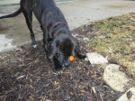 Janie finds an egg