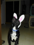 Ethel, ears...