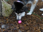 Lizzy finds an egg...